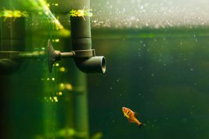 Best Aquarium Filter in 2020: Complete Reviews with Comparison