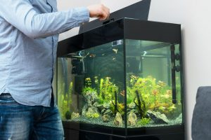 Fluval External Filter Review