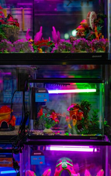 aquariums with filters and light