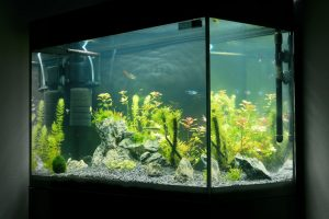 Best Aquarium Filter for Large Tanks in 2020 – Complete Reviews with Comparison