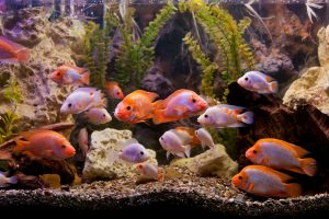 How to Set Up a Fish Tank Filter System