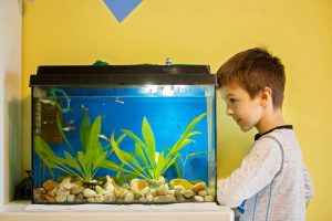 Should a Fish Tank Filter Be Under Water?