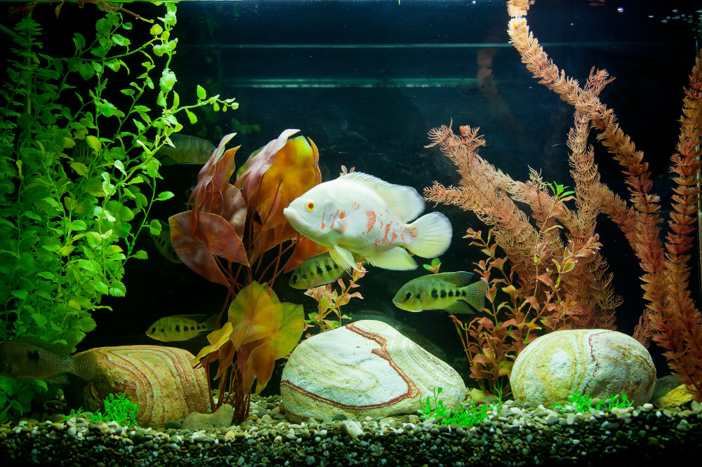when to change filter in fish tank