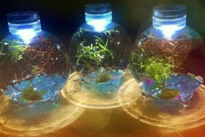 Best Jars for an Enclosed Self-sustaining Water Ecosystem