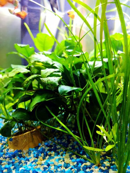 Best low light, easy growing aquarium plants - small tank