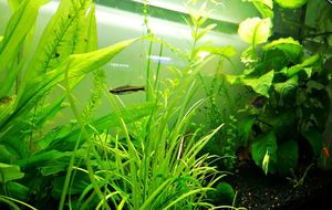 20 Best Easy To Grow, Low Light Plants for Aquariums