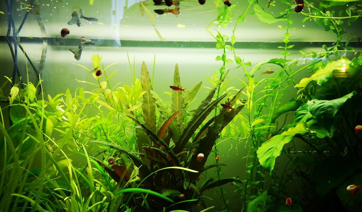 What's the easiest aquarium fish to care for