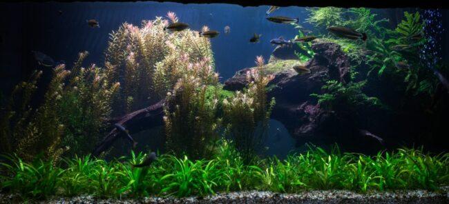 clean aquarium scape