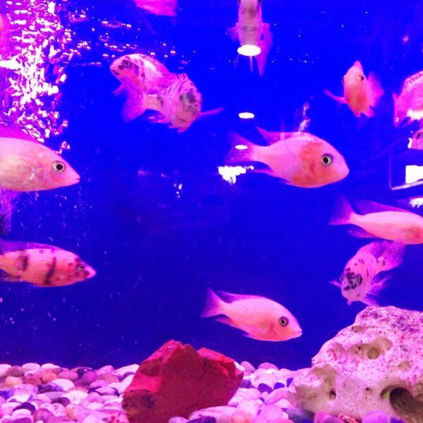 UV aquarium life