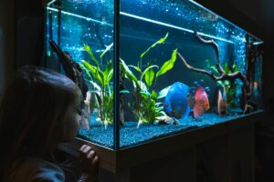 What Does a UV Sterilizer Do in a Freshwater Aquarium?