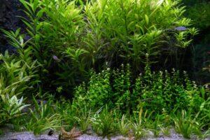 Do Aquarium Plants Need a Filter? [Answered]