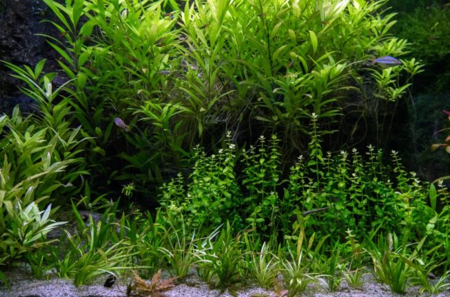 do aquarium plants need a filter