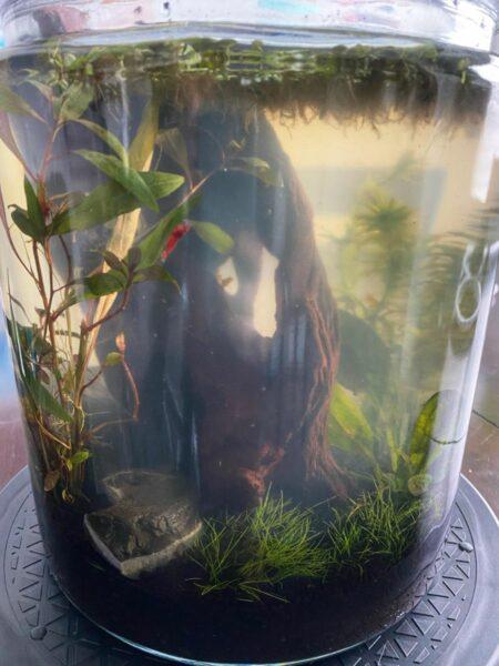 jarrarium with shrimp