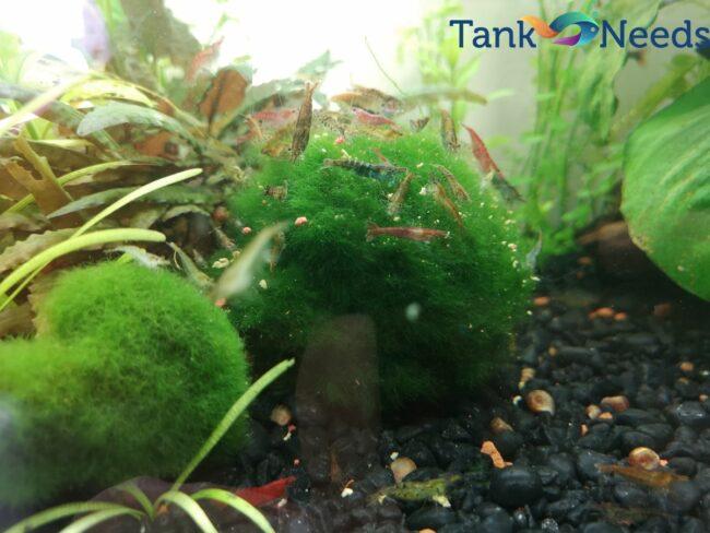 no filter freshwater aquarium