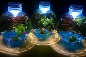 Sealed vs Unsealed Jarrarium: What to Choose? [Answered]