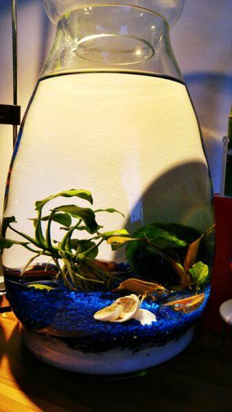 small jarrarium with shrimp