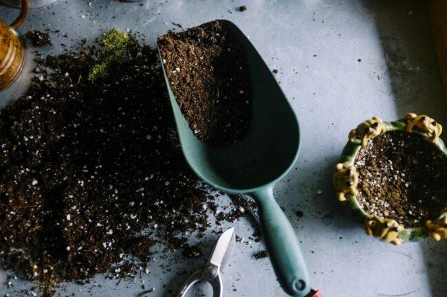 potting soil for jarrarium